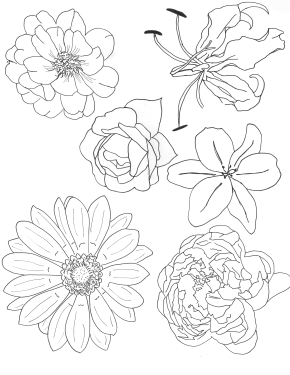 FlowerSketches