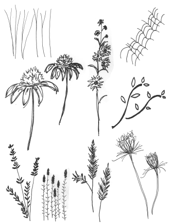 FlowerSketches2